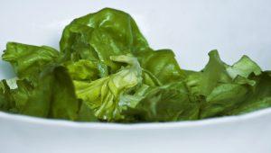 lettuce-1319852